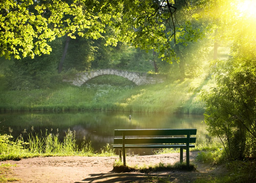 Bench on the bank of the river in summer day with evening sunlight